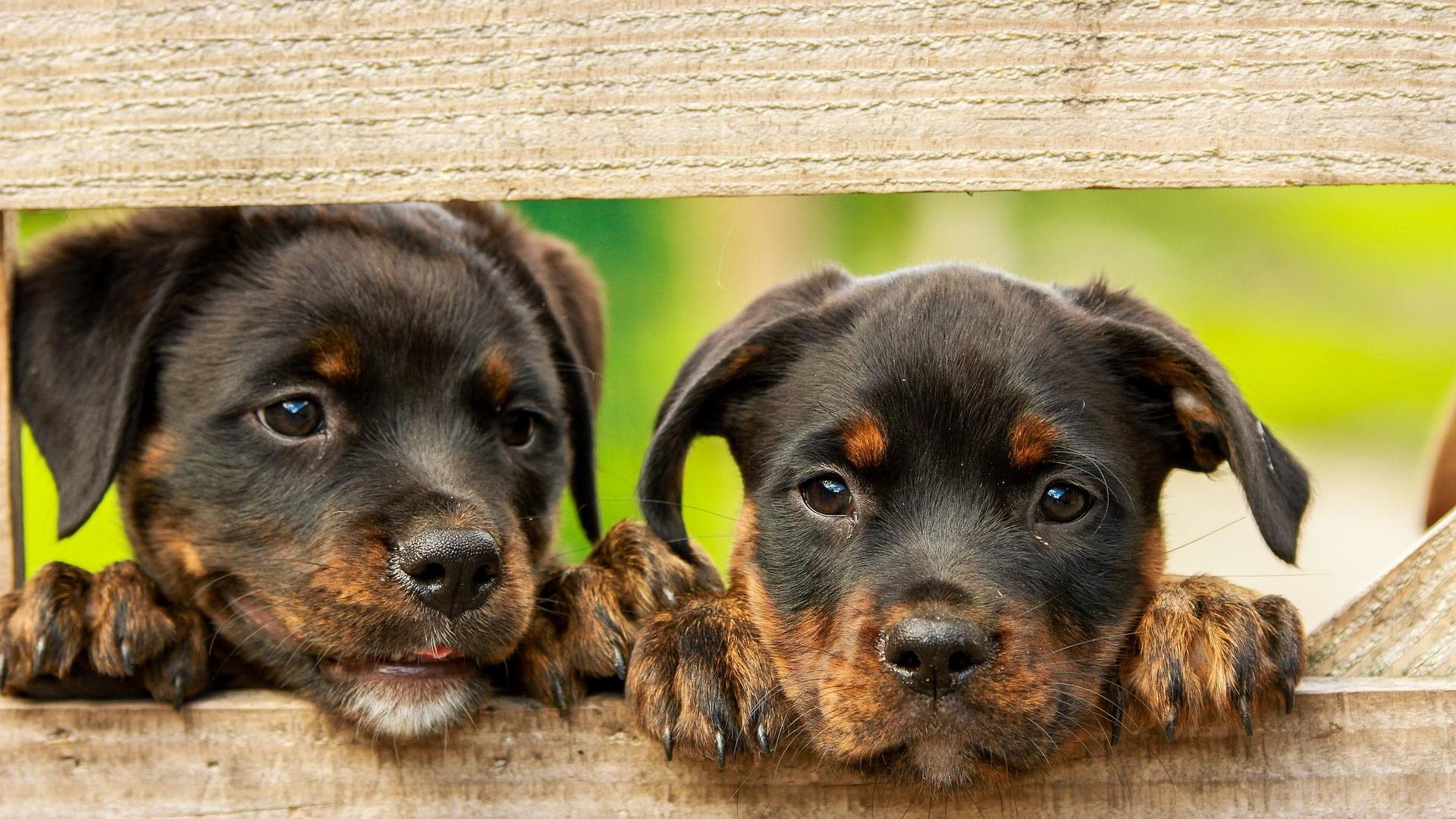 Millionen-Menschen-betroffen-Hundeprofi-Martin-R-tter-widerlegt-Mythos