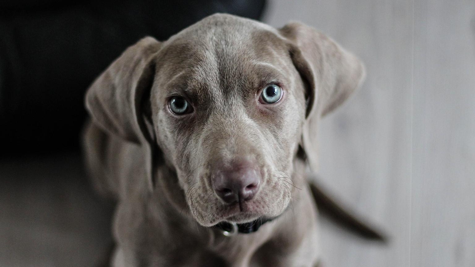Hund-will-nicht-alleine-bleiben-Martin-R-tter-wei-was-jetzt-zu-tun-ist