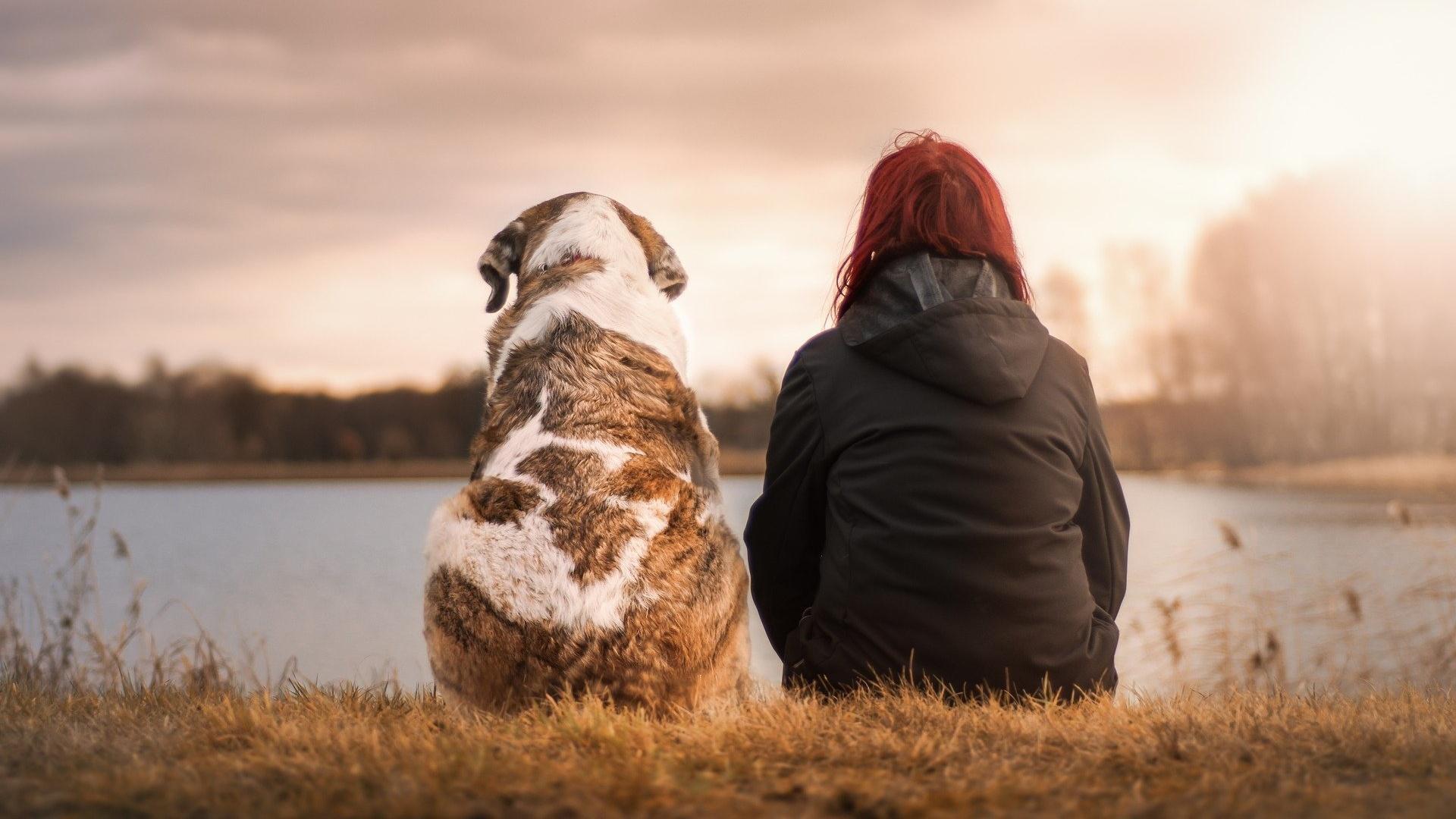 Sie-wollen-einen-Hund-kaufen-Diese-vier-Tipps-von-Martin-R-tter-sollten-Sie-beachten